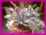 cactus Hubs Bought Me 3/21/03